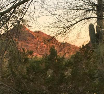 Botanical Garden, Arizona, Sunset, Jim Peters Outdoors